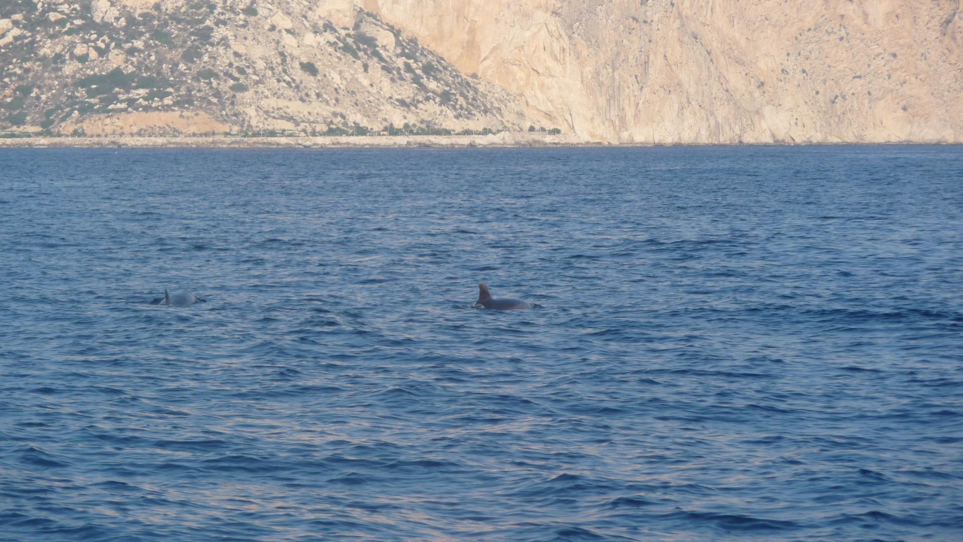 Dolfijnen, Calpe, Costa Blanca, Spanje